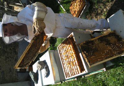 Visite du rucher d'Anne Mangin