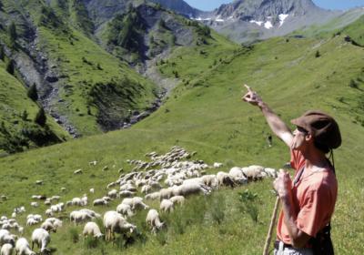 Une journée en alpage à la rencontre des bergers
